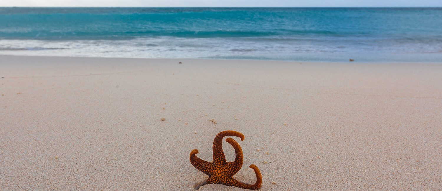 cairns-starfish_credit-tourism-and-events-queensland-christoffer-collin | Pacific Hotel Cairns