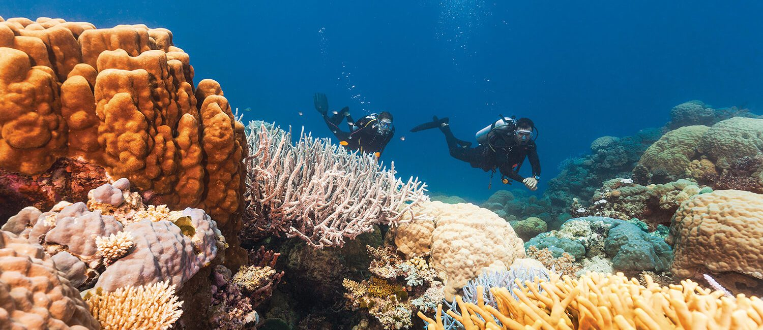 scuba-diving-cairns | Pacific Hotel Cairns