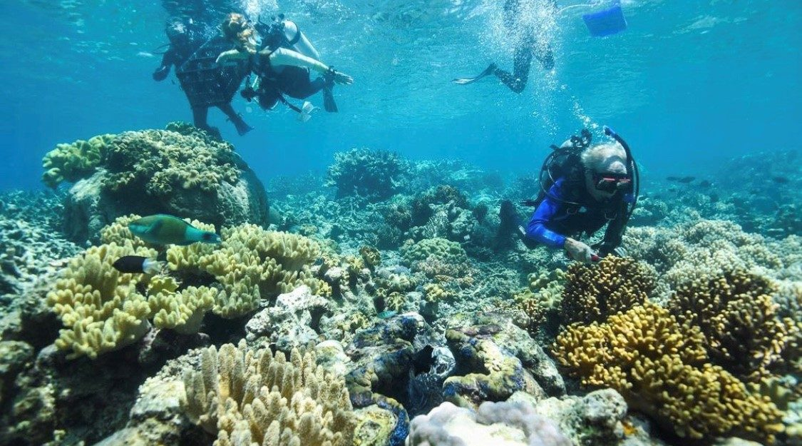 Reef Restoration Project Cairns Great Barrier Reef